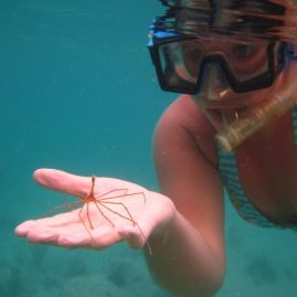 Caribbean Sailing Charters | Snorkel discoveries in BVI